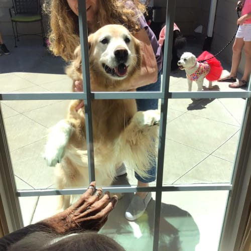 A golden retriever interacting with a resident through glass at Oxford Glen Memory Care at Owasso in Owasso, Oklahoma