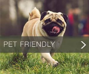 Pet Friendly apartments at Nexus Luxury Apartments in Virginia Beach, Virginia