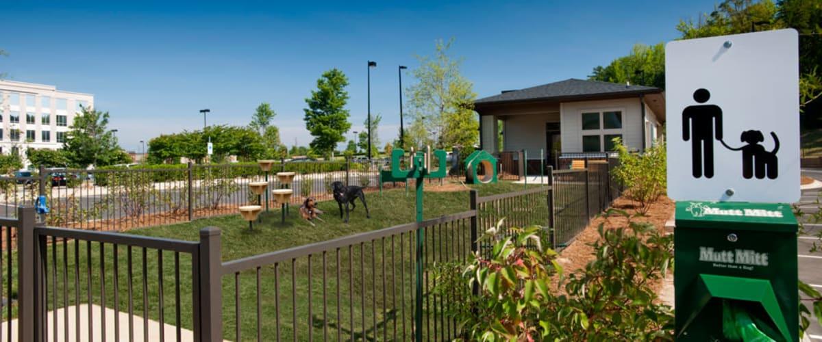 Dog park at Celsius in Charlotte, North Carolina