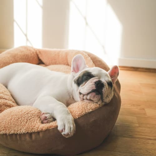 View our pet policy at Penn Crest Apartments in Allentown, Pennsylvania
