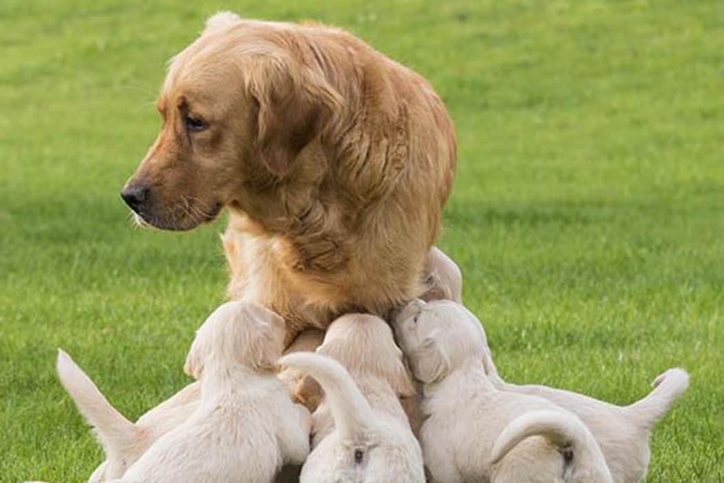 Information on spaying at Stoughton Animal Hospital