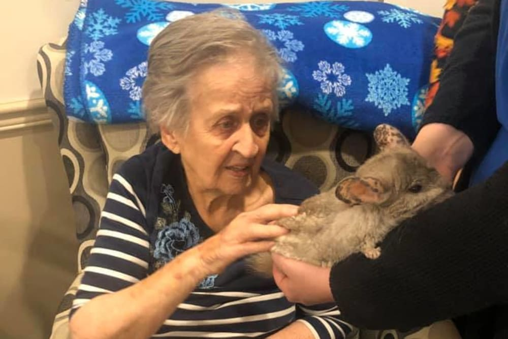 A resident petting a chinchilla at Brentwood at Niles in Niles, Michigan
