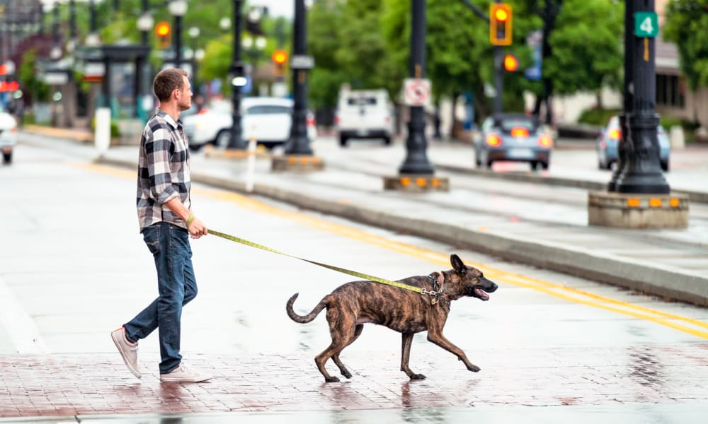 Resident taking his dog for a walk downtown near 200 East in Durham, North Carolina