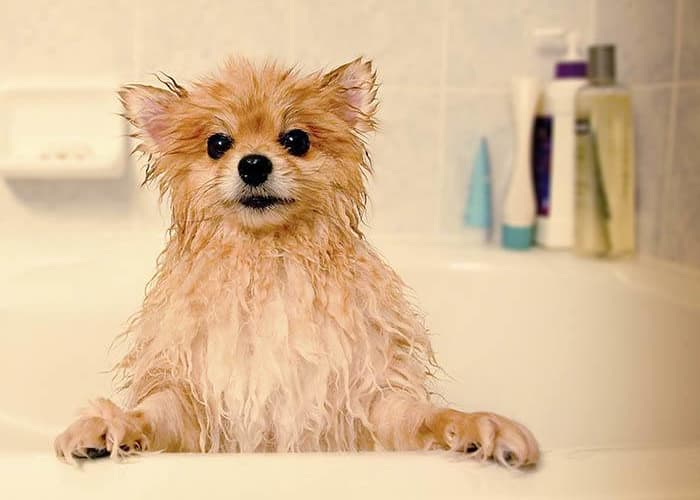 Pup mid-bath at Shoreline Central Animal Hospital
