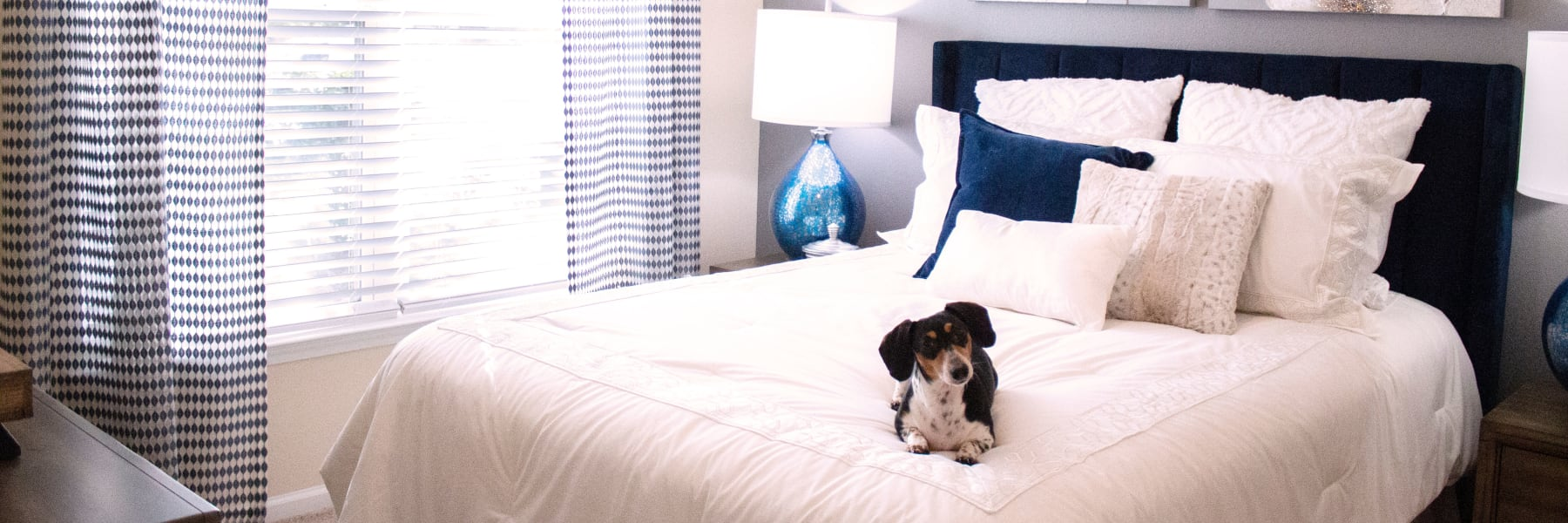 Pet friendly apartments in Fort Mill, South Carolina at Berkshire Fort Mill