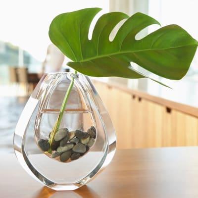 Plant in a decorative vase at Sofi Poway in Poway, California