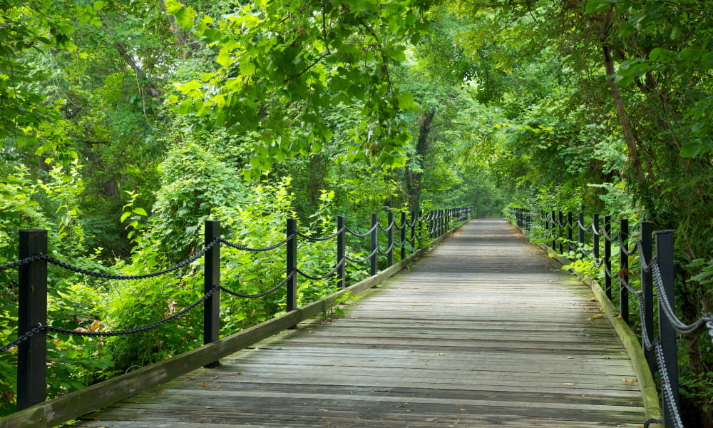 Forested path near Abrams Hall Senior Apartments in Washington, District of Columbia