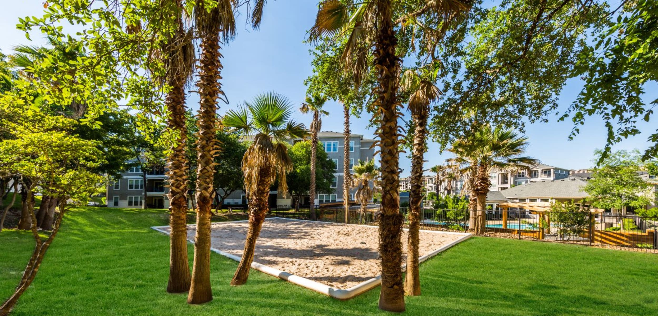 Palm trees and a sand court near the pool at Marquis at Crown Ridge in San Antonio, Texas