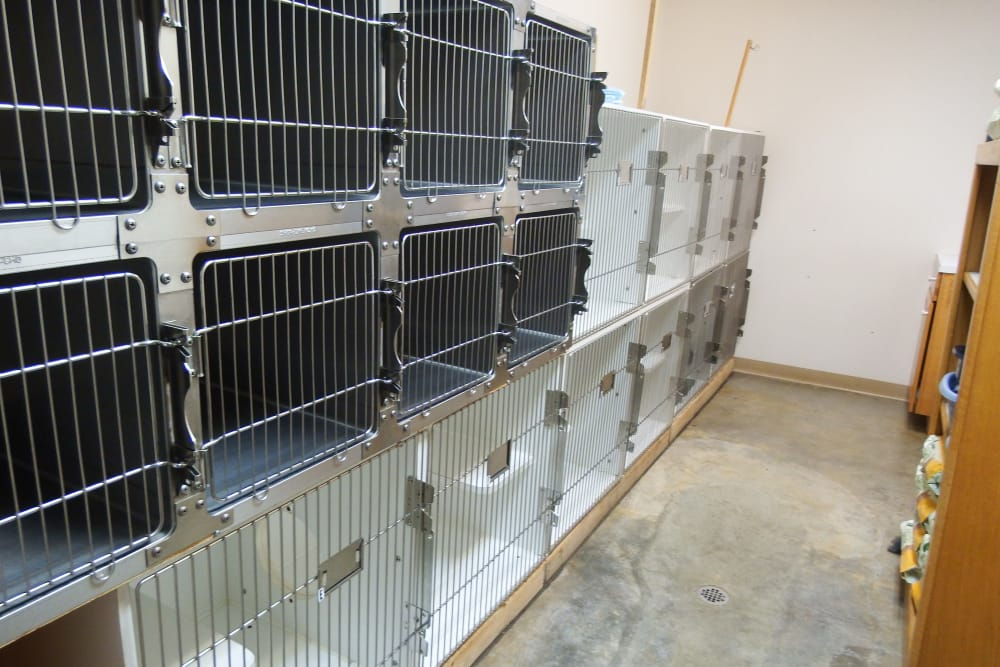 Boarding kitty condos at Angeles Clinic For Animals in Port Angeles, Washington