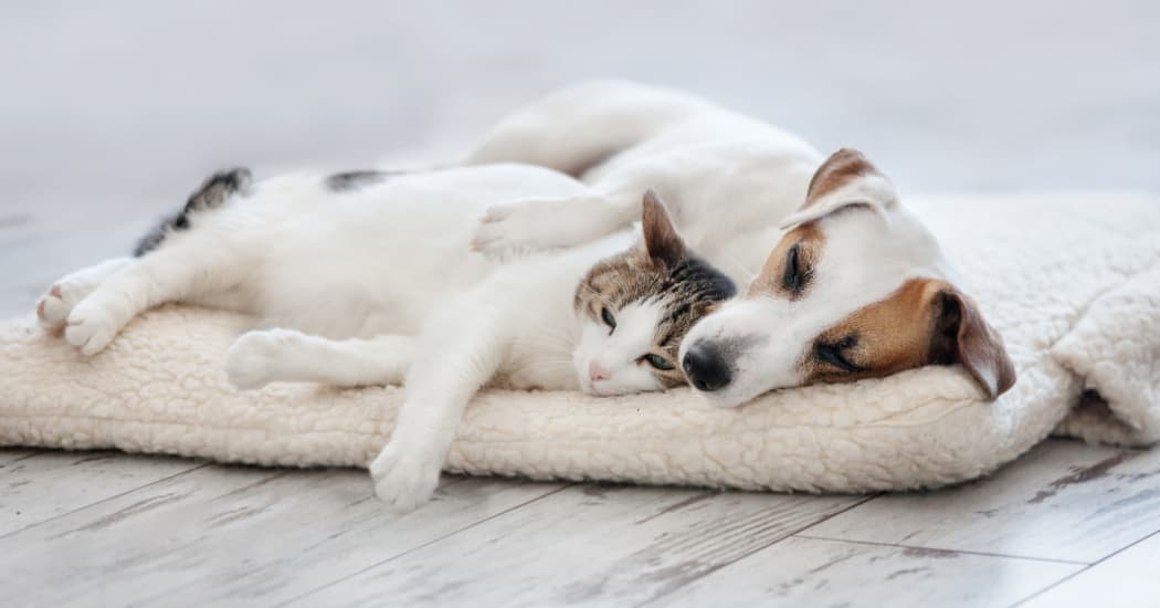 Dog and cat napping together in their new home at Woodbriar Apartments in Chesapeake