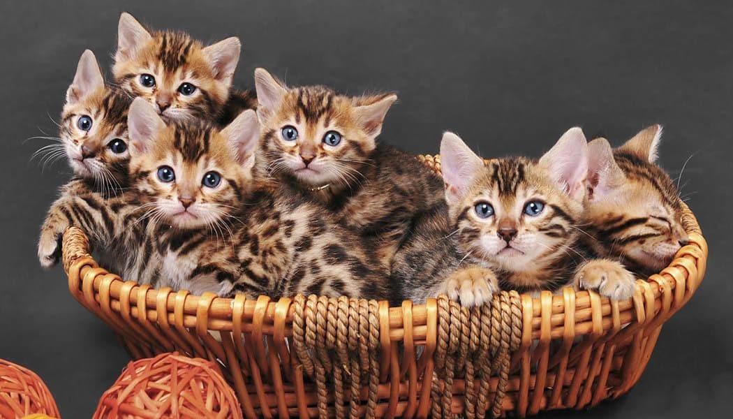 Basket full of kittens at Arizona Avenue Animal Clinic in Chandler, AZ