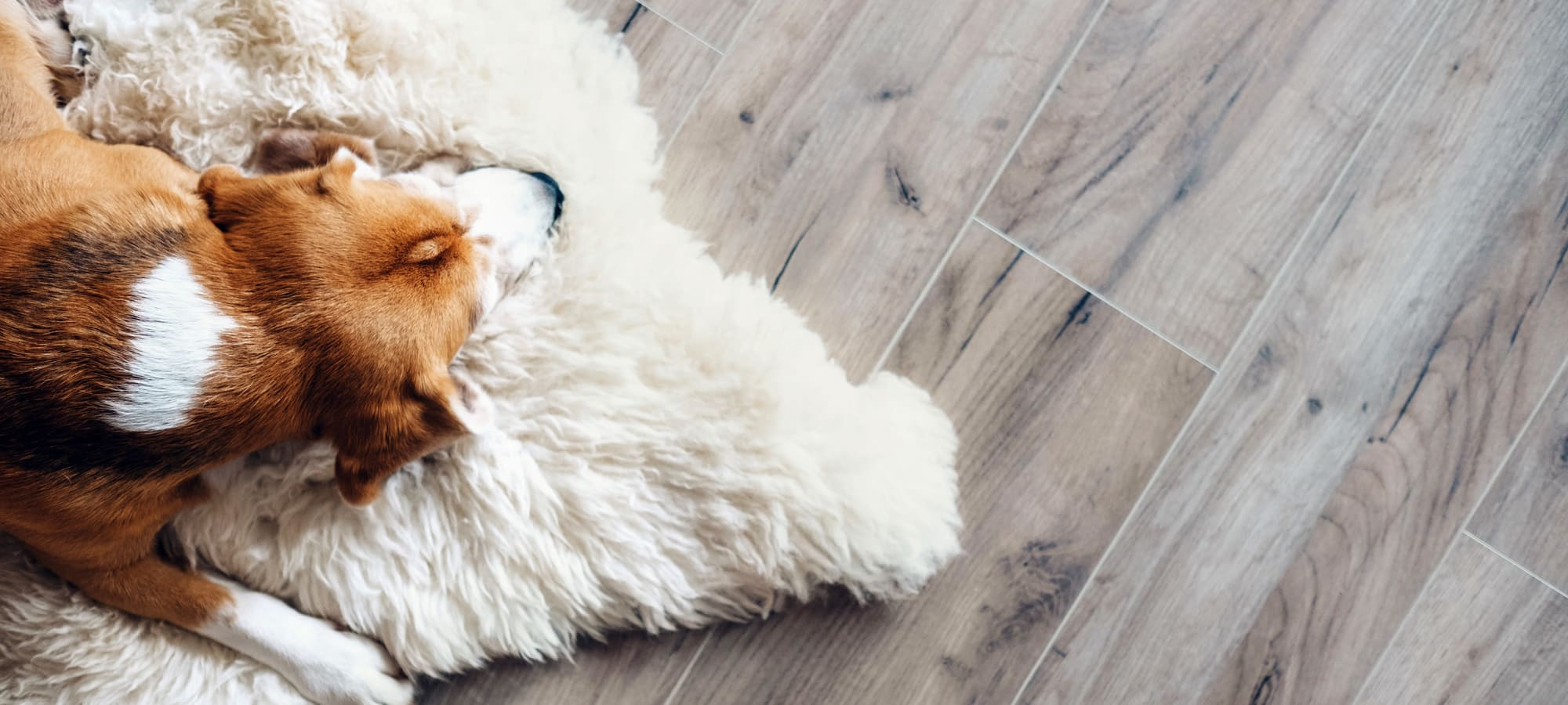 Pet policy at Marquis Rockwall in Rockwall, Texas