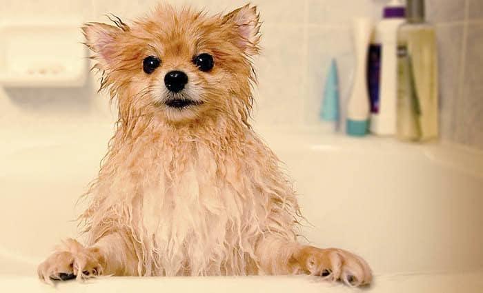 Pup mid-bath at Arizona Avenue Animal Clinic in Chandler, AZ