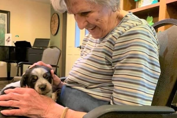 A small puppy gets a lot of attention at Ebenezer Ridges Campus in Burnsville, Minnesota