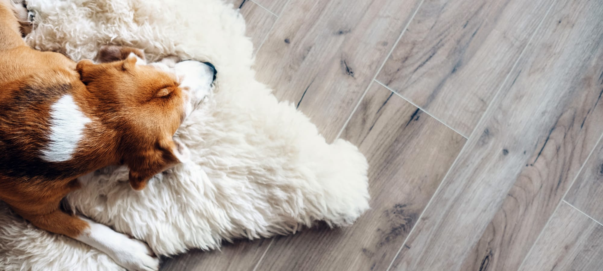 Pet policy at Marquis at Lantana in Flower Mound, Texas