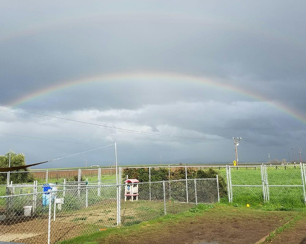 Rainbow above at University Pet Resort in Merced, California