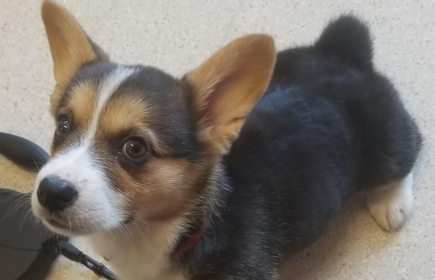 Didymus at Value Pet Clinic - Tacoma