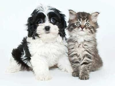 Happy puppy and kitten in their new home at City Centre Ithaca in Ithaca, New York