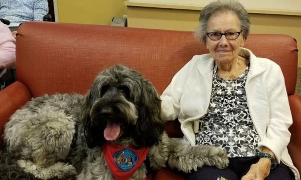 Therapy dog at The Birches at Harleysville in Harleysville, Pennsylvania