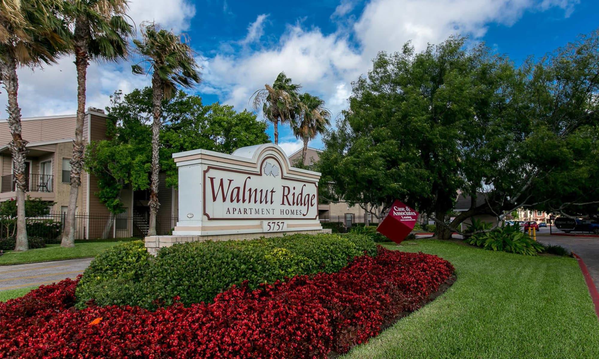 Walnut Ridge Apartments in Corpus Christi, Texas