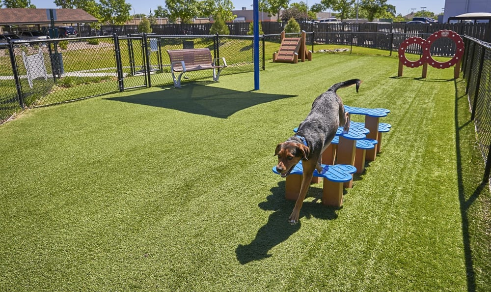 Bark Park at M2 Apartments