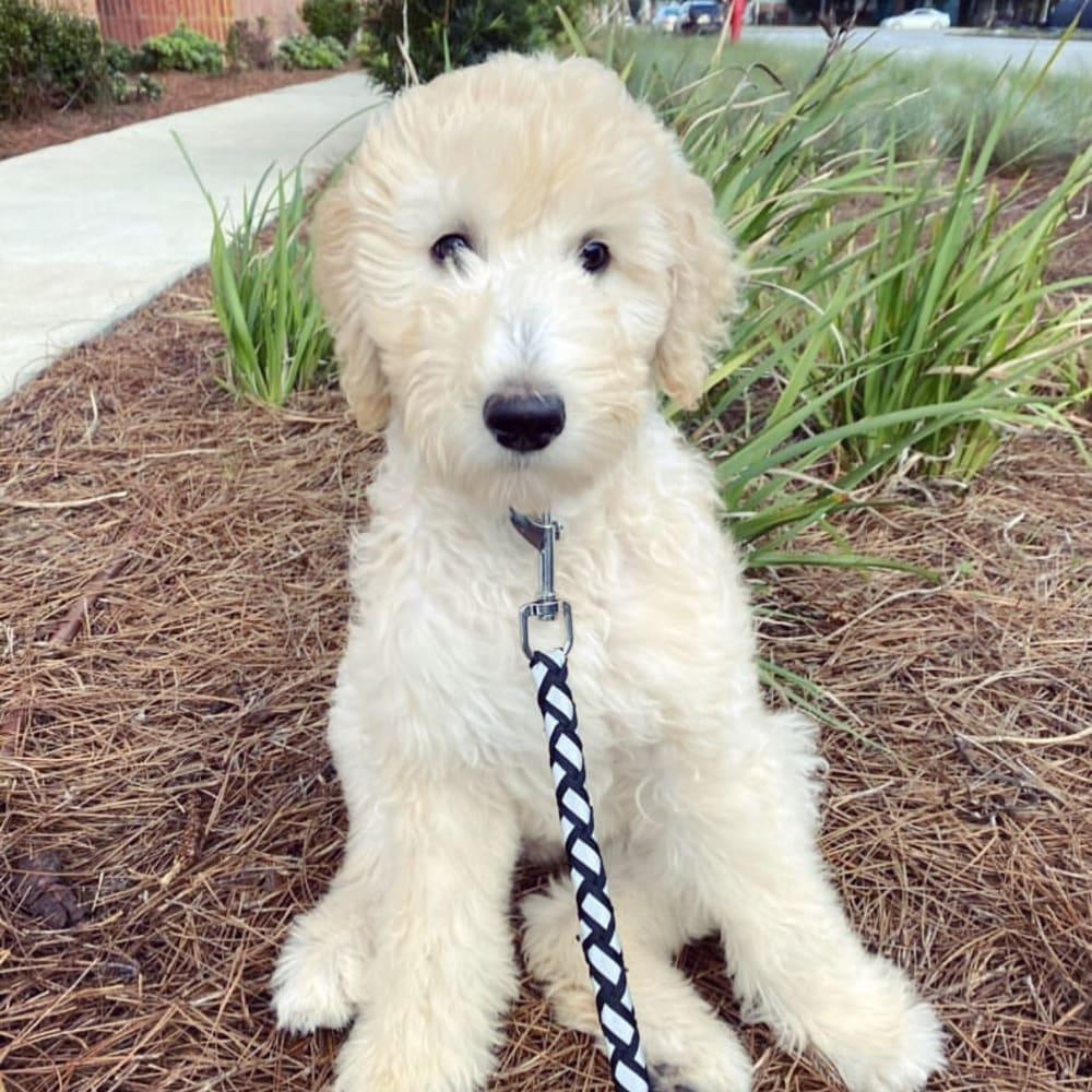 Happy dog at 511 Meeting in Charleston, South Carolina