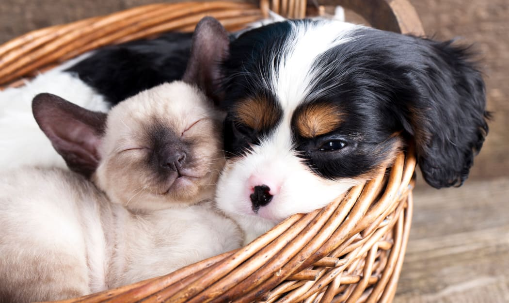 Pup and kitten resting in a basket together at their new home at IMT Kingwood in Kingwood, TX
