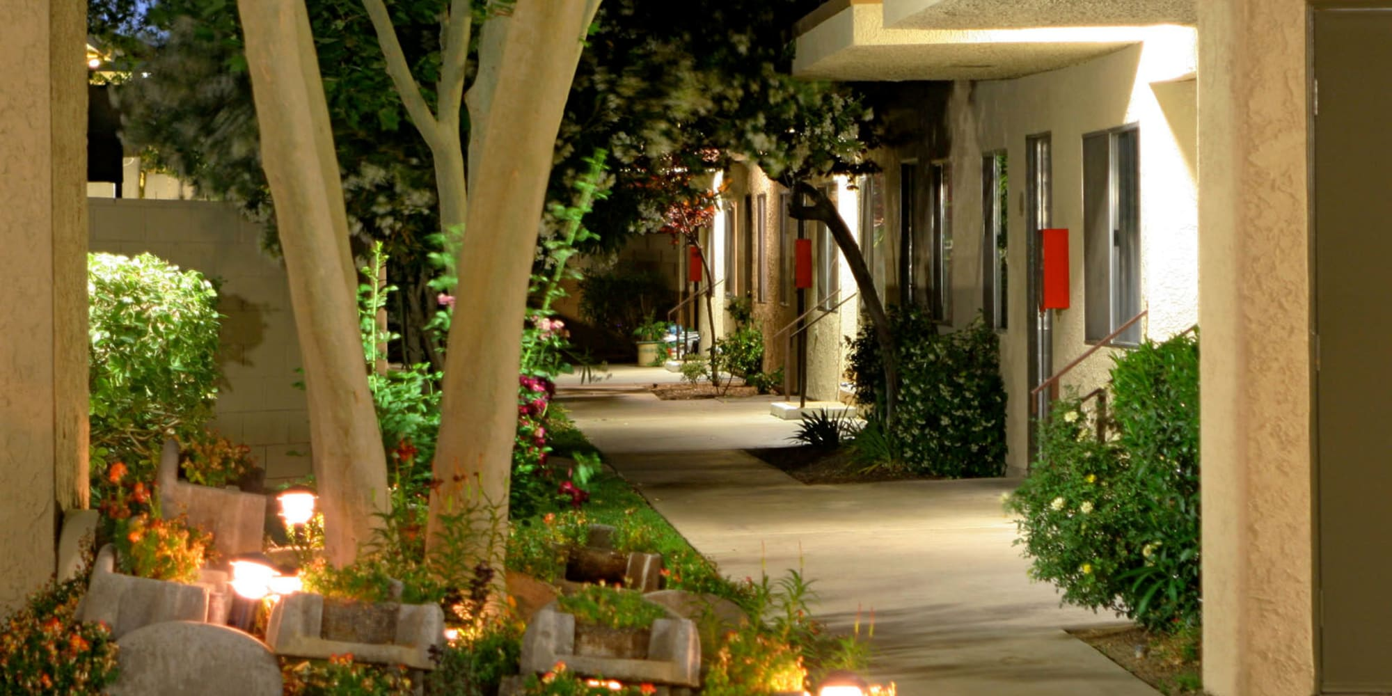 Flowers lit up by the community's evening lights at Parkwood in Lancaster, California