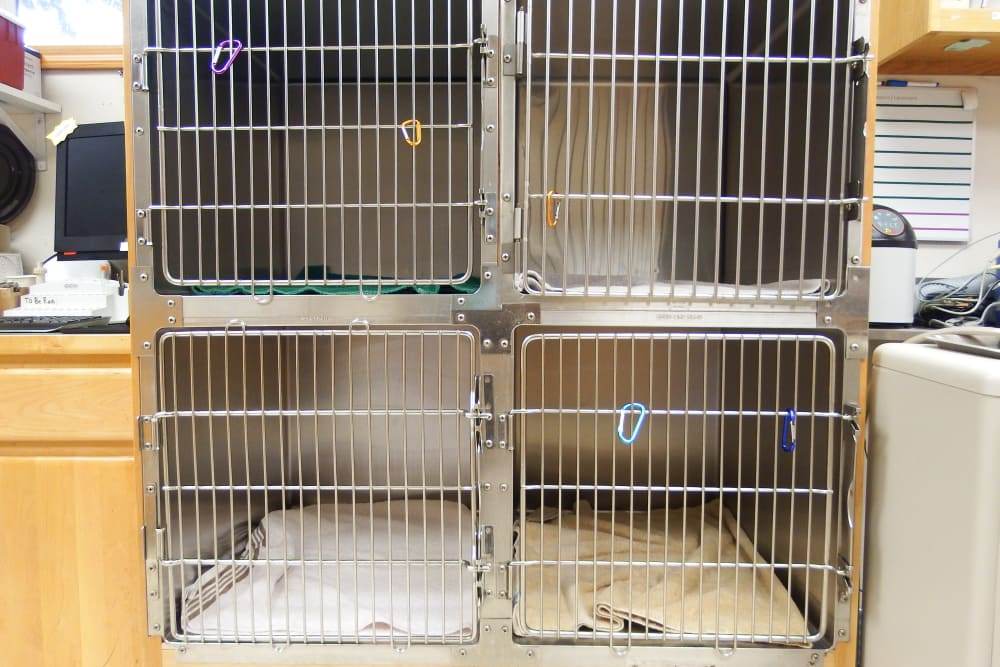 Treatment cages at Angeles Clinic For Animals in Port Angeles, Washington