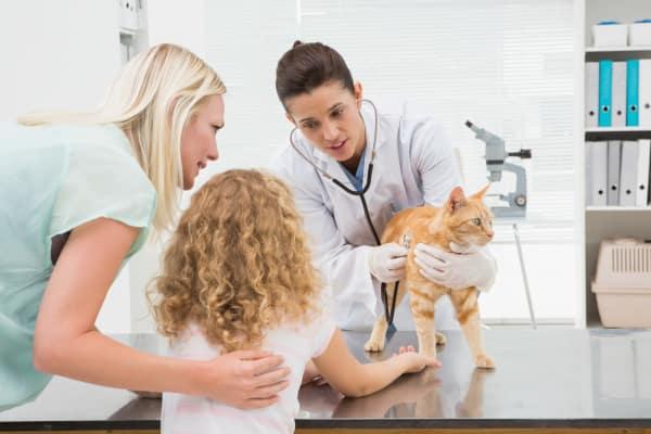 NVA Clinics & Hospitals