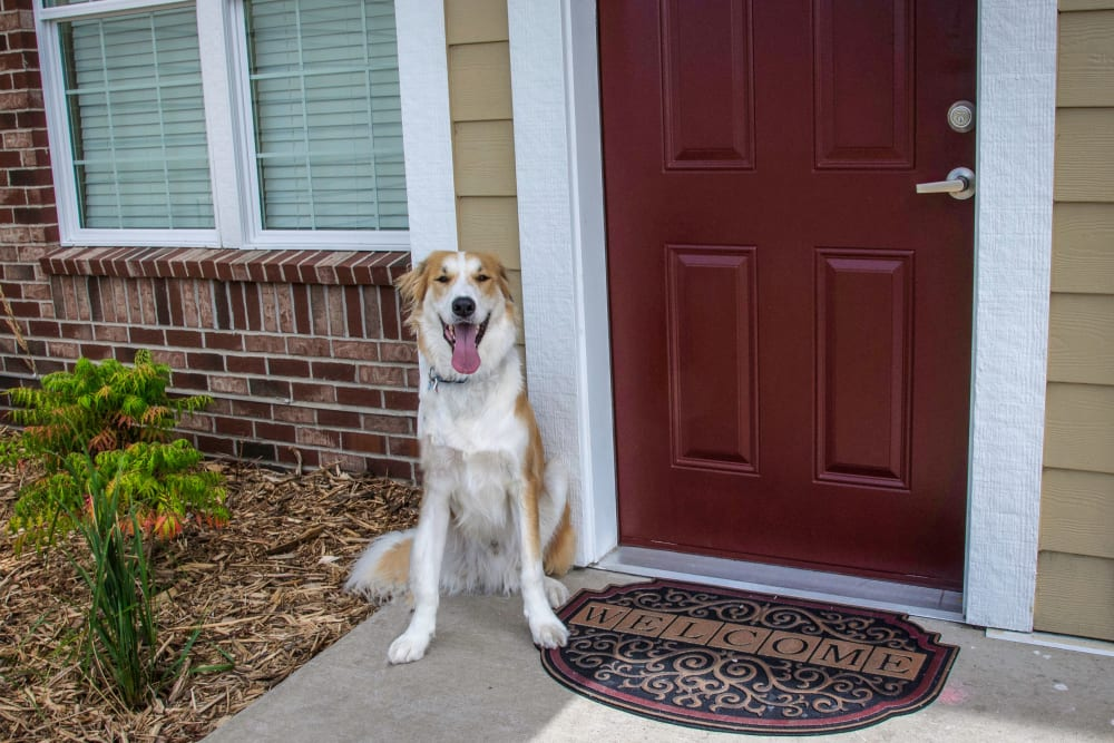 Dog Friendly Apartments For Rent In Rochester, MN