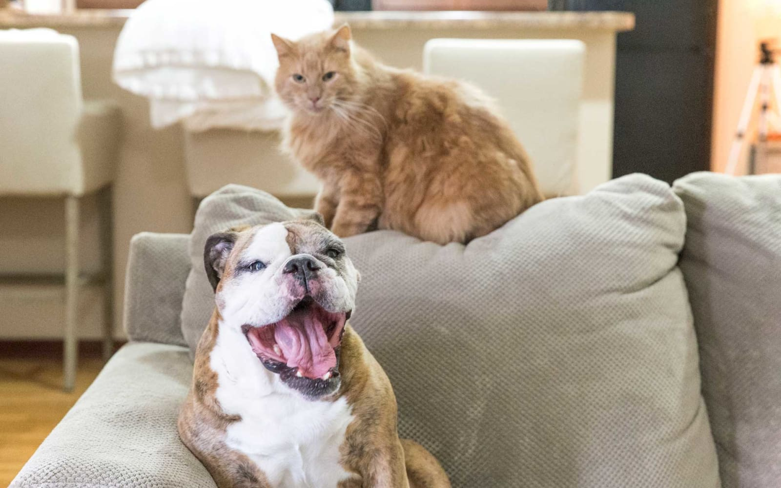 A happy dog and cat on the couch at Woodland Reserve in Ankeny, Iowa