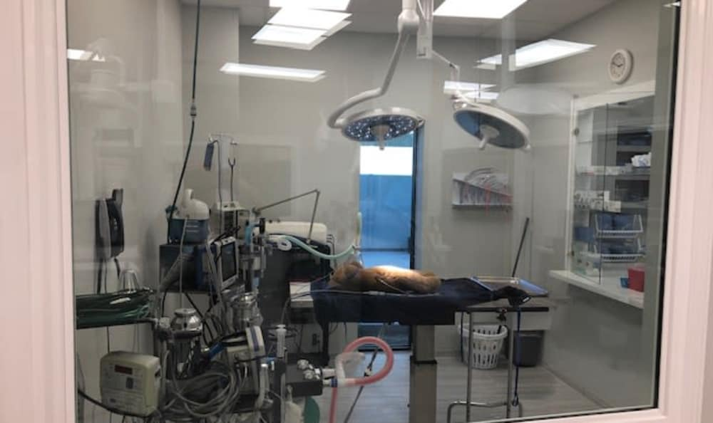 Operating room at Longwood Animal Hospital and Pet Resort In Cypress