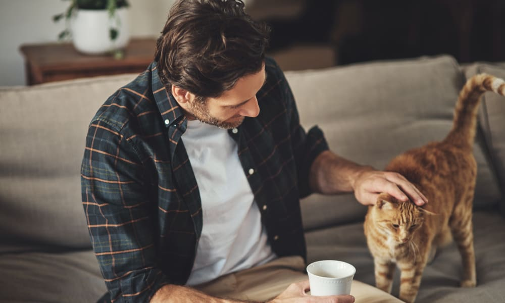 Resident petting their cat at Oaks Lincoln Apartments & Townhomes in Edina, Minnesota