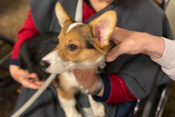 Residents hold a friendly dog at Ebenezer Ridges Campus in Burnsville, Minnesota