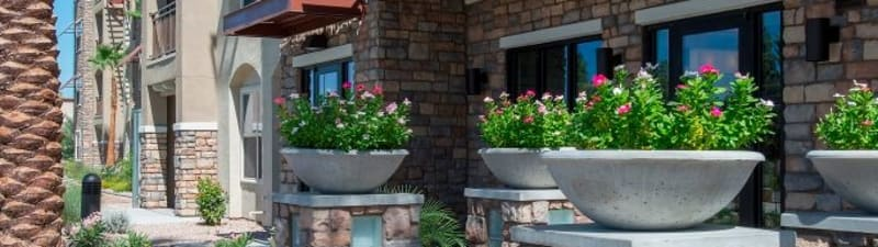Potted plants at Luxe Scottsdale Apartments's entry in Scottsdale, Arizona