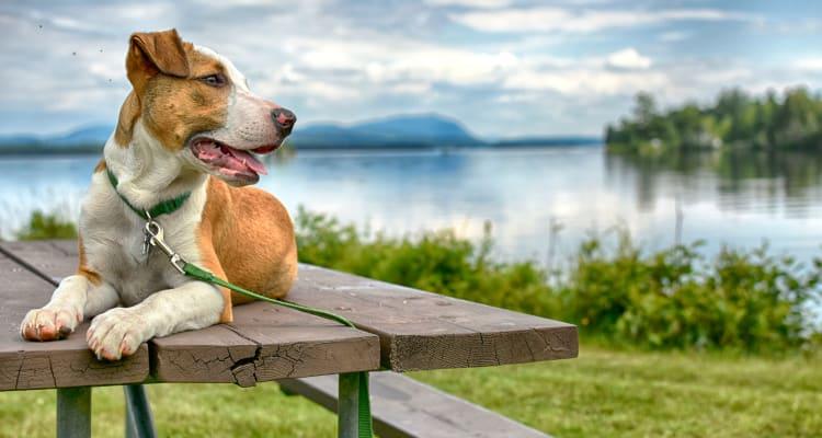 Dog relaxing by a lake in Colorado Springs, Colorado near FalconView