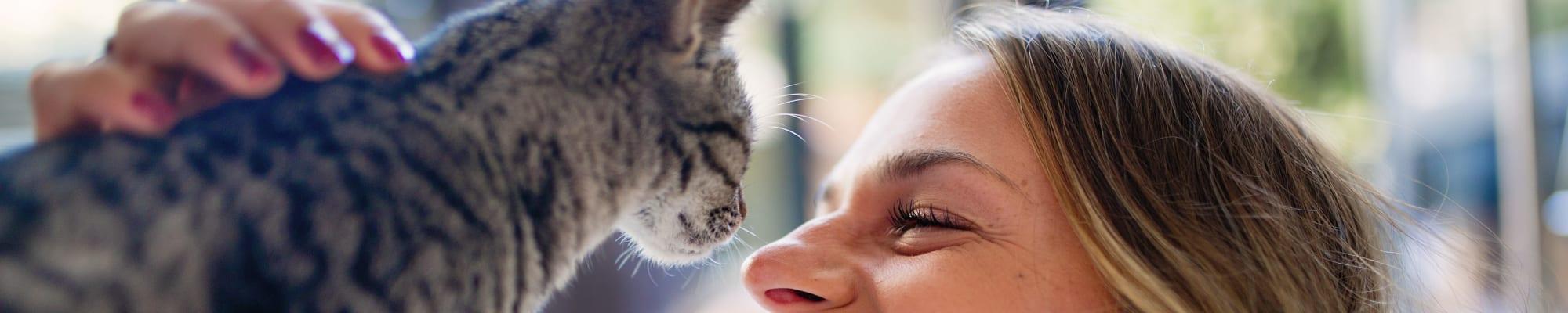 Pet policy at K Street Flats Apartment Homes in Berkeley, California