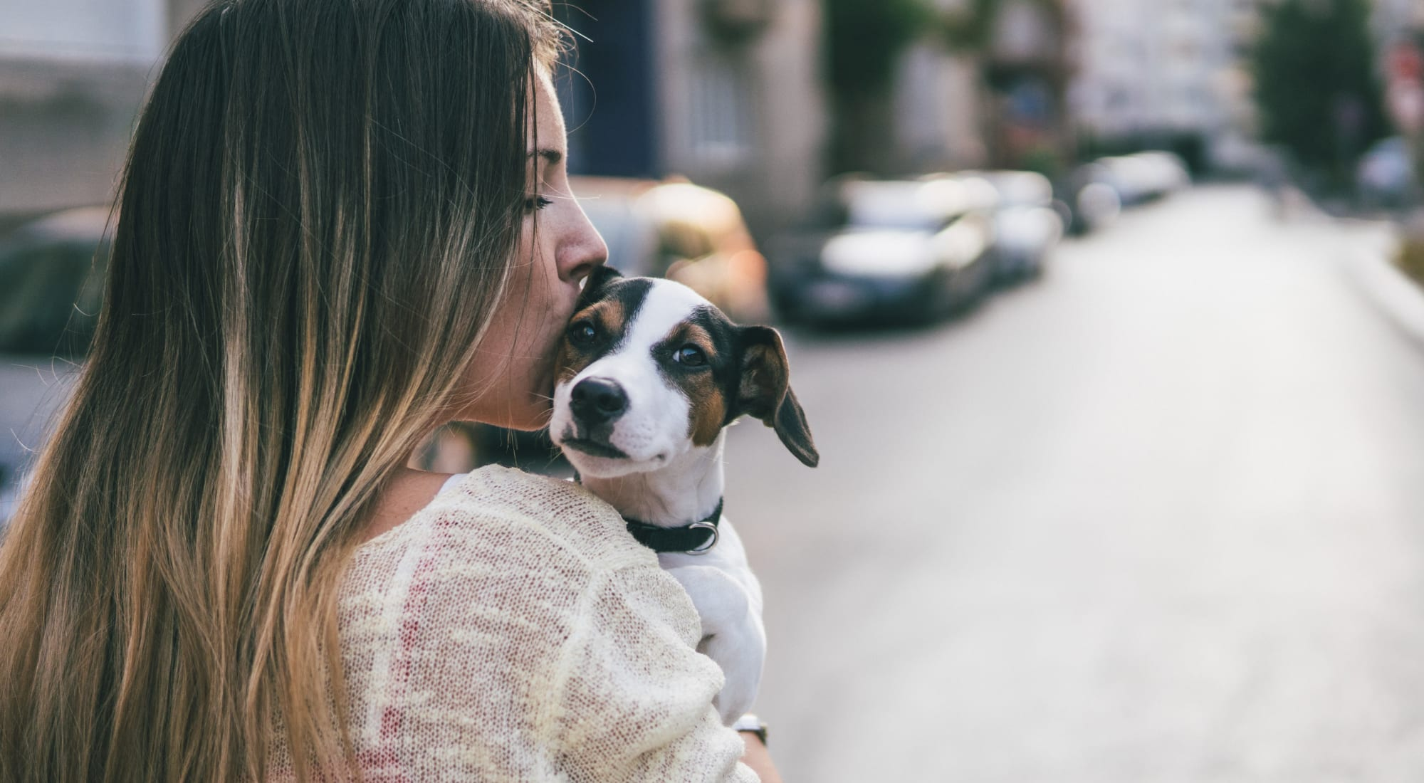 Pet-friendly apartments at Sofi Sunnyvale in Sunnyvale, California