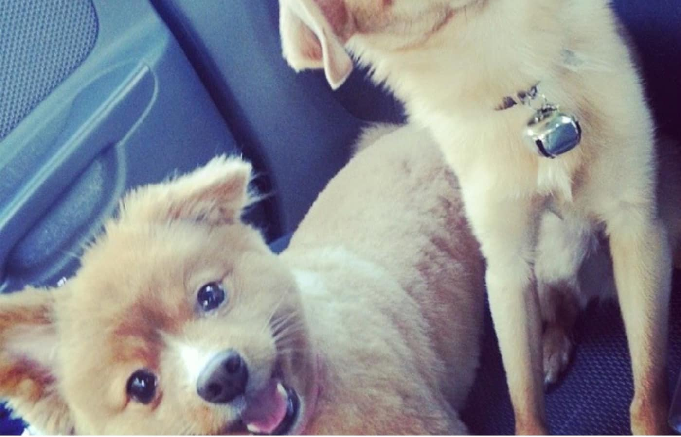 Couple of our resident puppies going for a ride near Value Pet Clinic - Tacoma