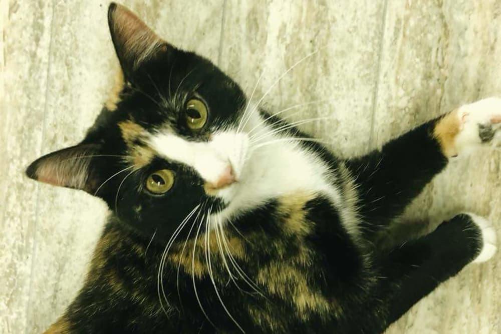 Cat at Sheridan Road Veterinary Clinic in Tulsa