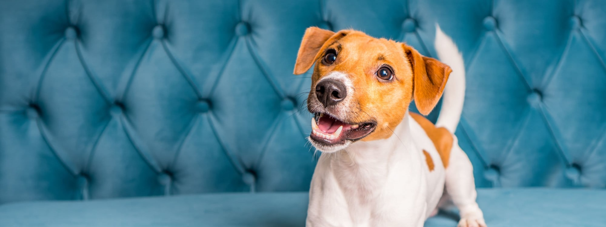 Tanglewood Apartments's pet policy in Louisville, Kentucky