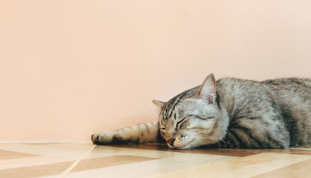Cat laying down at Taunton Gardens in Taunton, Massachusetts