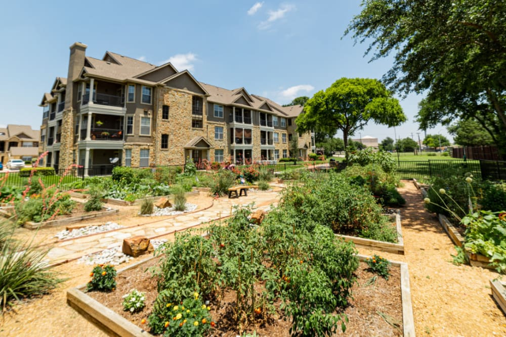 Community garden at Marquis at Bellaire Ranch in Fort Worth, Texas