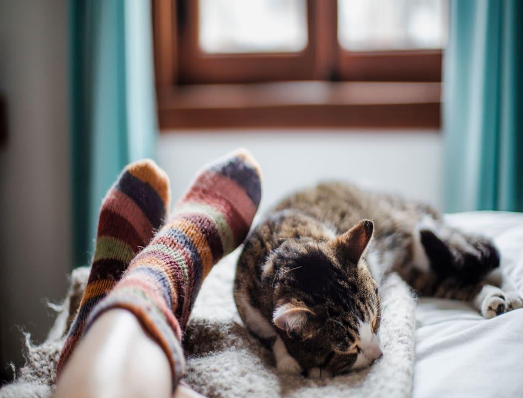 Cat sleeping near its owner at Cedartree Apartments in Santa Clara, California