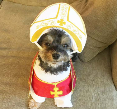 Symphony Veterinary Center has their own pope! Pope Barkley.