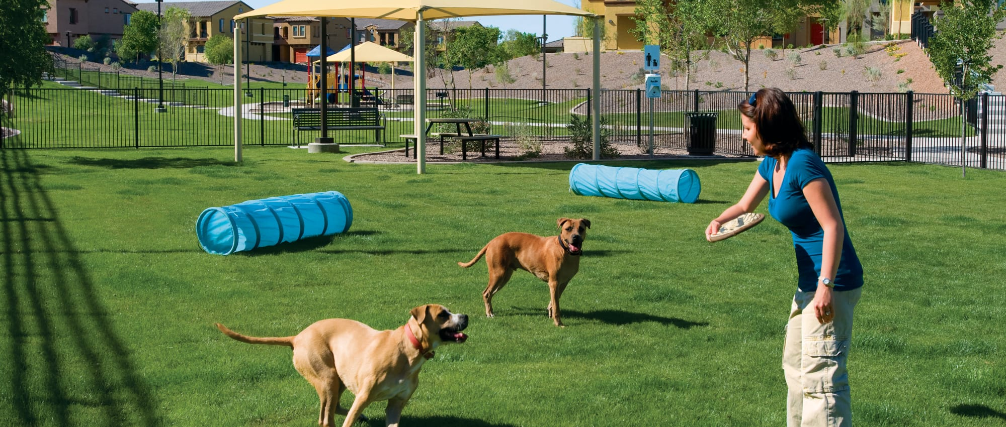 Dog agility course in the onsite dog park at one of Mark-Taylor's Tempe Pet Friendly Communities in Tempe, Arizona