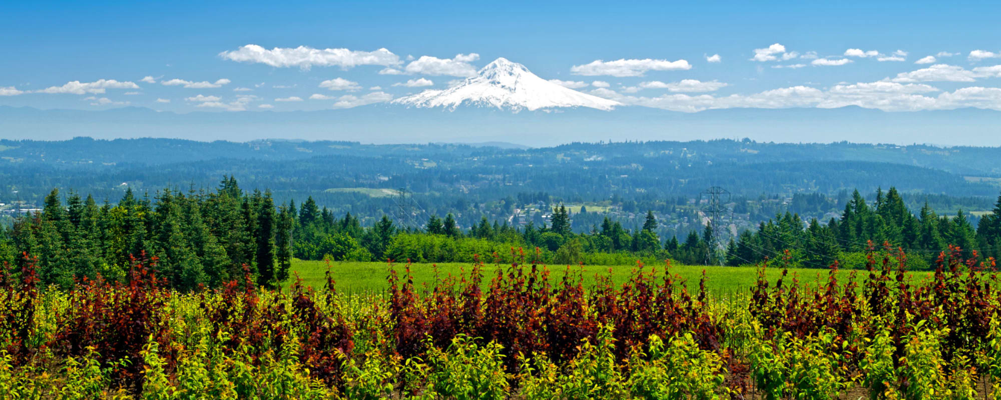 Learn about the activities and events hosted at Rosewood Memory Care in Hillsboro, Oregon