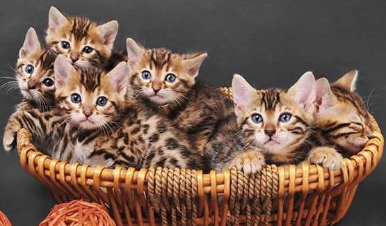 Basket full of kittens at Parkview Animal Hospital