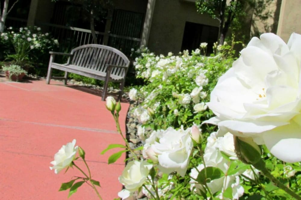Nice outdoor bench to relax on at Winding Commons Senior Living in Carmichael, California